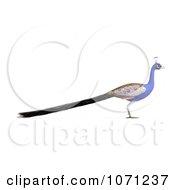 3d Blue Peacock 2