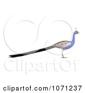 Clipart 3d Blue Peacock 2 Royalty Free CGI Illustration by Ralf61