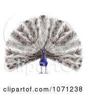 3d Blue Peacock 1