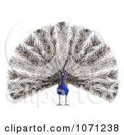 Clipart 3d Blue Peacock 1 Royalty Free CGI Illustration by Ralf61