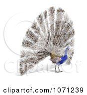 Clipart 3d Blue Peacock 5 Royalty Free CGI Illustration by Ralf61