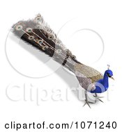 Clipart 3d Blue Peacock 6 Royalty Free CGI Illustration by Ralf61