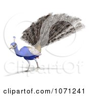 Clipart 3d Blue Peacock 9 Royalty Free CGI Illustration by Ralf61