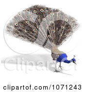 Clipart 3d Blue Peacock 8 Royalty Free CGI Illustration by Ralf61