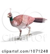 Clipart 3d Female Peahen Peacock 3 Royalty Free CGI Illustration by Ralf61