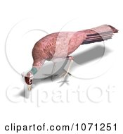 Clipart 3d Female Peahen Peacock 6 Royalty Free CGI Illustration by Ralf61