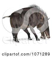 Clipart 3d Prehistoric Entelodon Dinosaur Sniffing 2 Royalty Free CGI Illustration