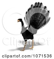 Clipart 3d Black Peacock 2 Royalty Free CGI Illustration