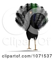 Clipart 3d Black Peacock 1 Royalty Free CGI Illustration by Ralf61