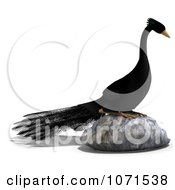 Clipart 3d Black Peacock On A Rock Royalty Free CGI Illustration