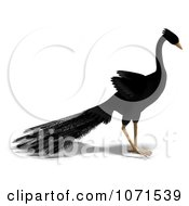 Clipart 3d Black Peacock 4 Royalty Free CGI Illustration