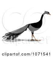 Clipart 3d Black Peacock 6 Royalty Free CGI Illustration