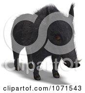 Clipart 3d Wild Black Boar Pig 1 Royalty Free CGI Illustration