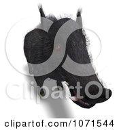 Clipart 3d Wild Black Boar Pig 2 Royalty Free CGI Illustration