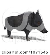 Clipart 3d Wild Black Boar Pig 3 Royalty Free CGI Illustration