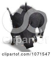 Clipart 3d Wild Black Boar Pig Attacking Royalty Free CGI Illustration