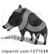 Clipart 3d Wild Black Boar Pig 5 Royalty Free CGI Illustration
