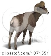 Clipart 3d Ovis Aries Sheep Ram With Curled Horns From Behind 2 Royalty Free CGI Illustration