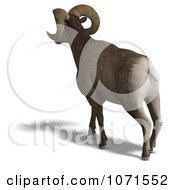 Clipart 3d Ovis Aries Sheep Ram With Curled Horns From Behind 1 Royalty Free CGI Illustration