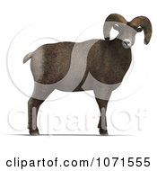 Clipart 3d Ovis Aries Sheep Ram With Curled Horns 1 Royalty Free CGI Illustration