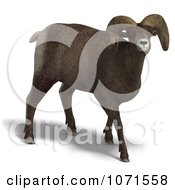 Clipart 3d Ovis Aries Sheep Ram With Curled Horns 2 Royalty Free CGI Illustration
