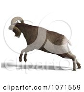 Clipart 3d Charging Ovis Aries Sheep Ram With Curled Horns 3 Royalty Free CGI Illustration