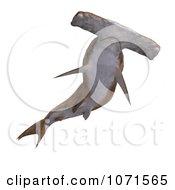 Clipart 3d Brown Hammerhead Shark 9 Royalty Free CGI Illustration