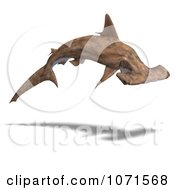 Clipart 3d Brown Hammerhead Shark 5 Royalty Free CGI Illustration by Ralf61