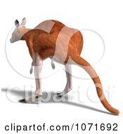 Clipart 3d Australian Kangaroo Hopping 3 Royalty Free CGI Illustration
