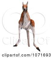 Clipart 3d Australian Kangaroo Hopping 4 Royalty Free CGI Illustration