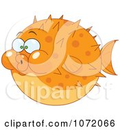 Orange Blow Puffer Fish