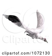 Clipart 3d White Crane Bird Flying 3 Royalty Free CGI Illustration by Ralf61