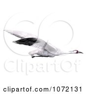 Clipart 3d White Crane Bird Flying 4 Royalty Free CGI Illustration by Ralf61