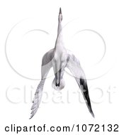 Clipart 3d White Crane Bird Flying 5 Royalty Free CGI Illustration by Ralf61