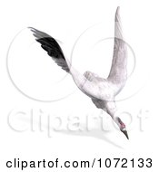 Clipart 3d White Crane Bird Flying 6 Royalty Free CGI Illustration by Ralf61