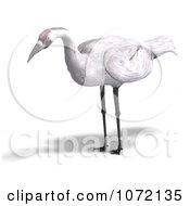 Clipart 3d White Crane Bird 1 Royalty Free CGI Illustration by Ralf61