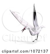 Clipart 3d White Crane Bird Flying 1 Royalty Free CGI Illustration by Ralf61