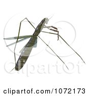 Clipart 3d Praying Mantis Bug 10 Royalty Free CGI Illustration