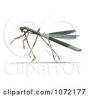 Clipart 3d Praying Mantis Bug 8 Royalty Free CGI Illustration