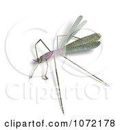 Clipart 3d Praying Mantis Bug 5 Royalty Free CGI Illustration