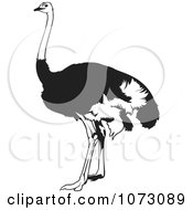 Clipart Black And White Emu Bird Royalty Free Vector Illustration