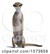 Clipart 3d Wild Meerkat Standing 1 Royalty Free CGI Illustration
