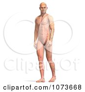 Clipart 3d Male Acupressure Acupuncture Chart Body 2 Royalty Free CGI Illustration