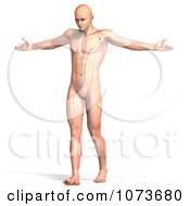 Clipart 3d Male Acupressure Acupuncture Chart Body 3 Royalty Free CGI Illustration