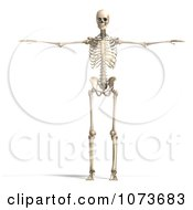 Clipart 3d Human Male Skeleton Holding His Arms Out Royalty Free CGI Illustration by Ralf61