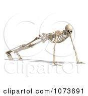 Clipart 3d Human Male Skeleton Doing Push Ups Royalty Free CGI Illustration