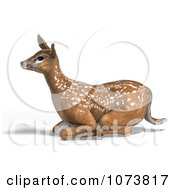 Clipart 3d Baby Yearling Deer Fawn Resting 1 Royalty Free CGI Illustration