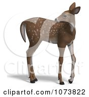 Clipart 3d Baby Yearling Deer Fawn 1 Royalty Free CGI Illustration