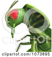 Clipart 3d Closeup Of A Green Waterbug Cockroach Insect Royalty Free CGI Illustration