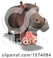 Clipart 3d Wild Hippo With An Open Mouth Royalty Free CGI Illustration
